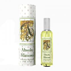 Absolu Mimosa